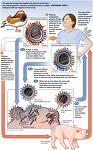 Εμβόλιο έναντι του ιού της γρίπης 2012-2013.