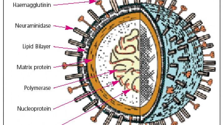 Ο ιός γρίπης A(H1N1) και πώς να προστατευθείτε